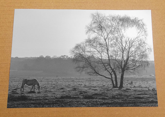 Neutral Black & White Prints